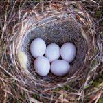 男性は托卵女子に要注意!妻の浮気で托卵させられないための予備知識